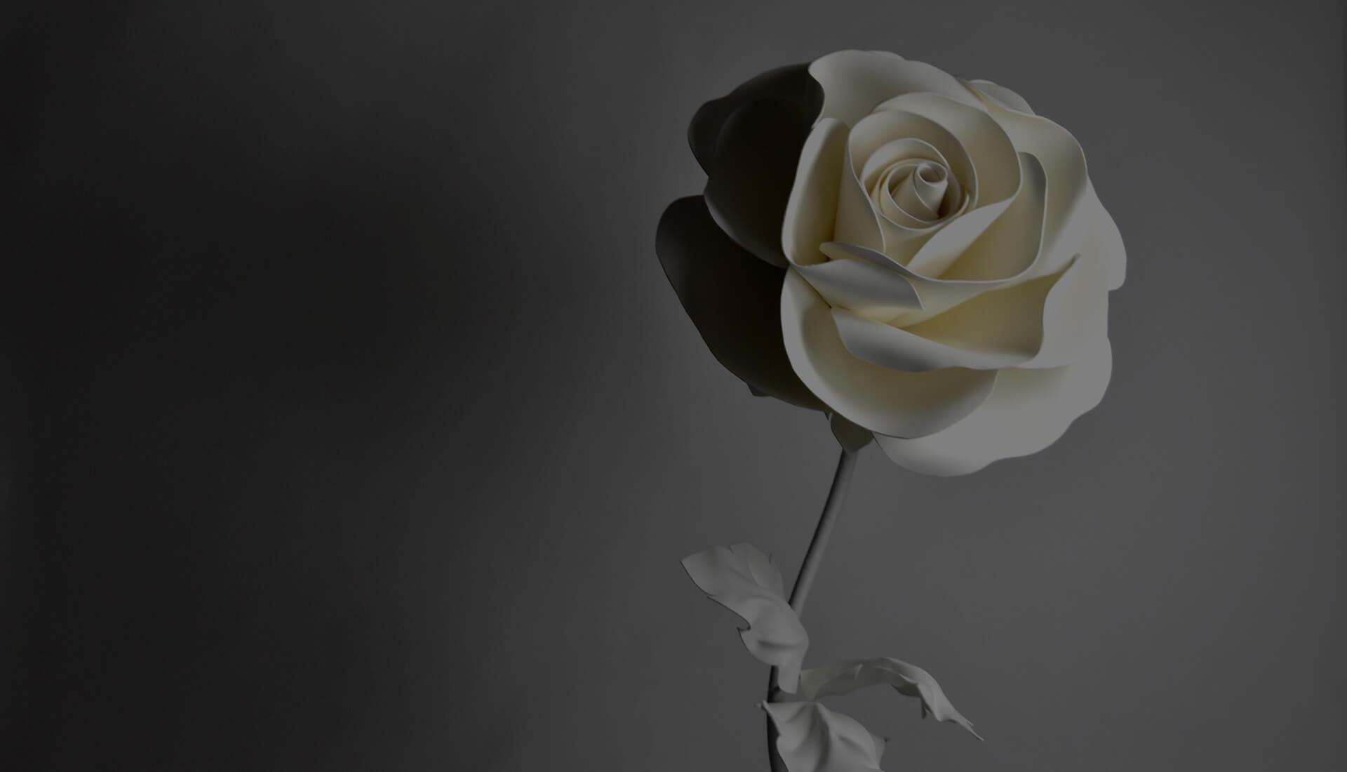 最初白バラ